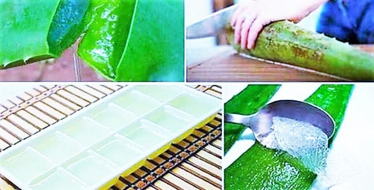 use aloe vera plant