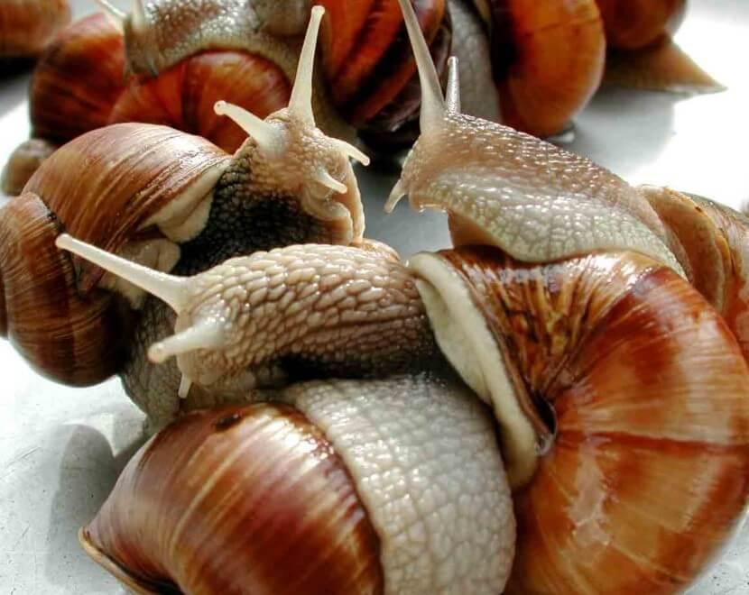 Slow food movements