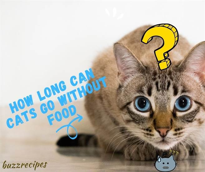How long Can Cats Go without Food??